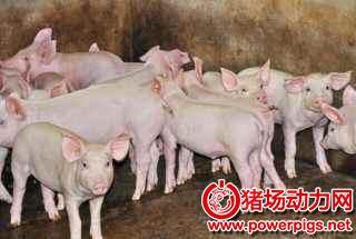 外购小猪时需要注意什么,听听老养殖户怎么说