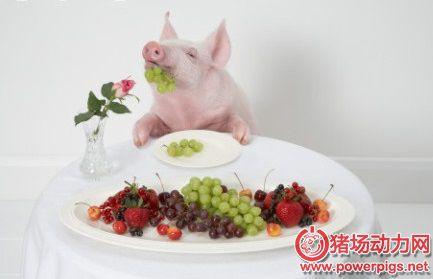 科学配饲哺乳母猪