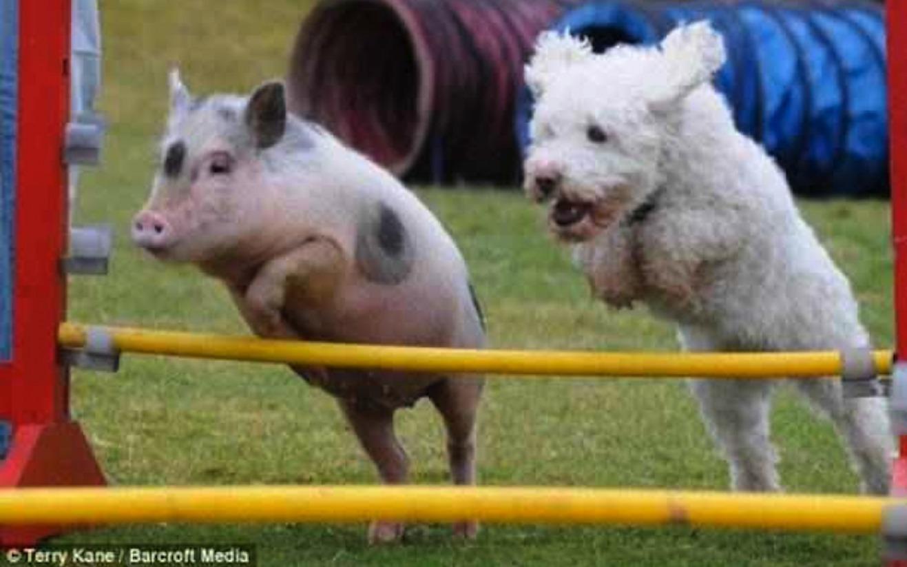 猪场分娩舍饲养管理操作细则