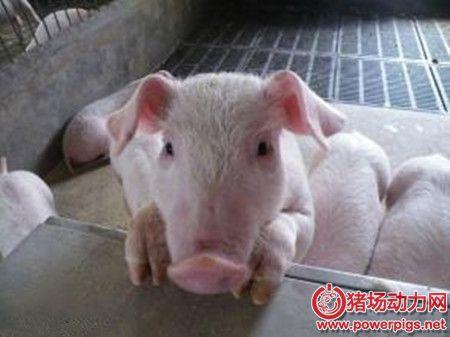 净化猪场环境,从学会处理猪场废水问题开始