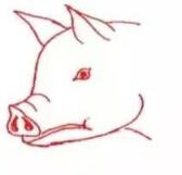 图解母猪发情、配种及人工授精技术