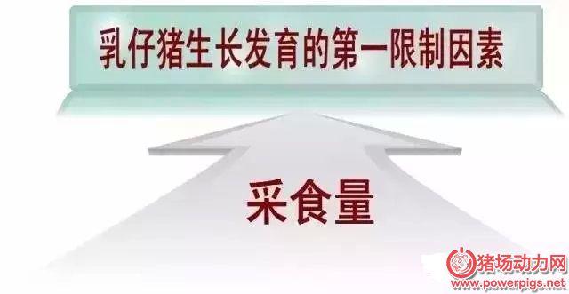 乳仔猪信号.webp.jpg
