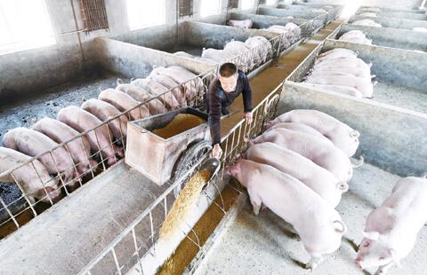 巧用十招提高育肥猪出栏率