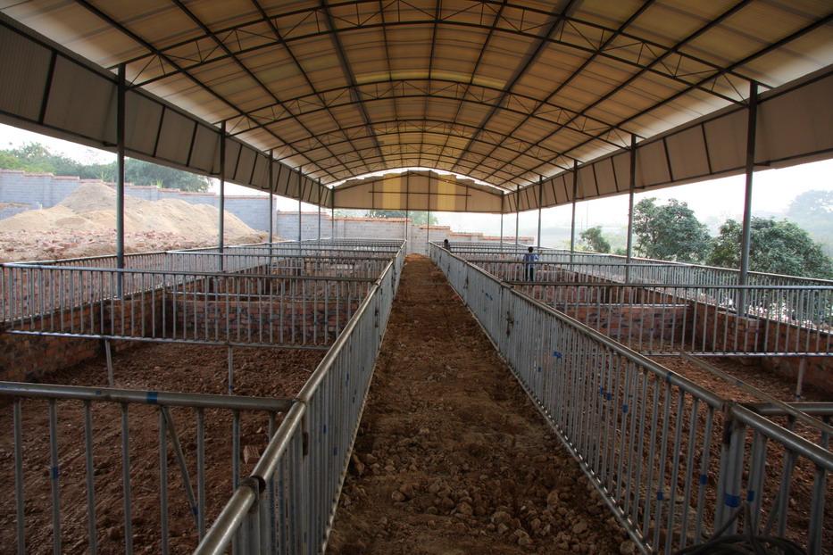 猪舍建造需注意的问题