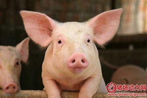 当代猪病流行新特点及其防控