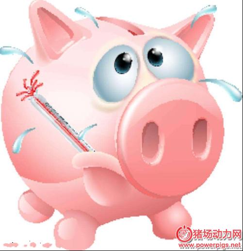 猪发烧,分两种,搞清楚,下对药