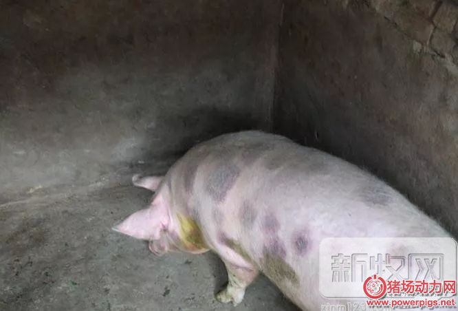 夏季猪场不得不防的6大疾病