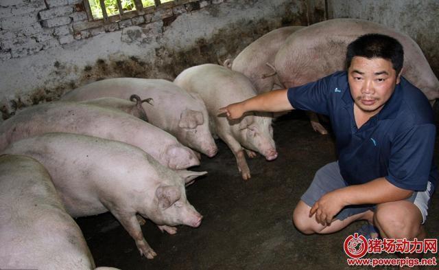 今年以后养猪,有三大风险等着你,养猪人做好准备了吗?