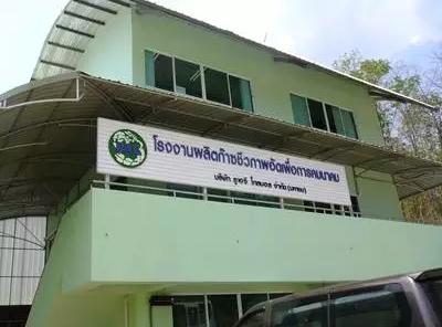 泰国学习营之进猪场——参观清迈第三大规模化猪场总结