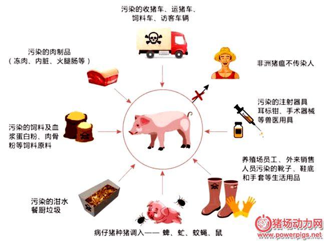 非洲猪瘟防控20问,这是内容最全的!