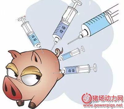 猪场细节管理——疫苗使用及需注意的细节