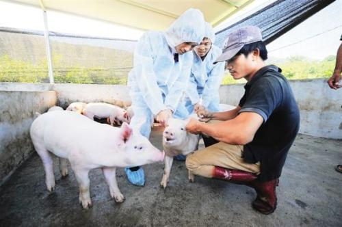 猪场的活疫苗和灭活疫苗有什么区别?