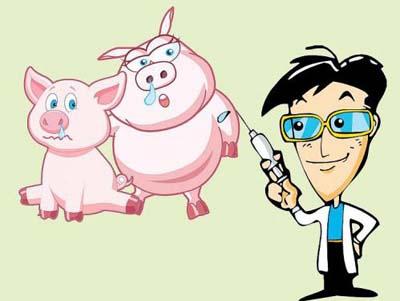 地塞米松在猪场使用的九大禁忌,用错了小心要猪命!