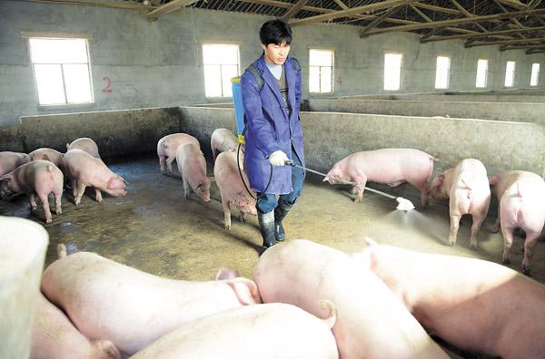 猪场的消毒和卫生管理