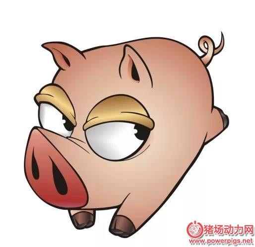 猪场生物安全管理,原来这么做才规范!经典
