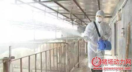养猪场认清消毒的19个误区,才能把猪场消毒做好,减少疫病发生