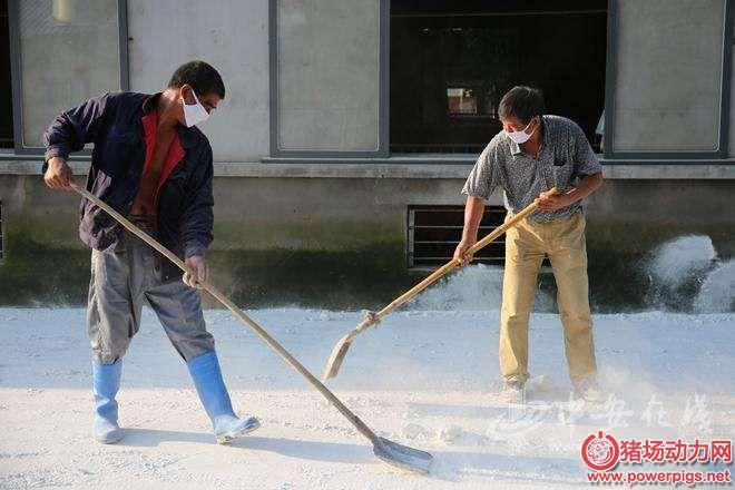 冬季猪场石灰消毒便宜又高效,用对方法很重要