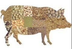 降成本不降低饲料品质的7项原则