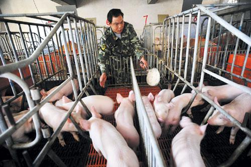 猪场如何科学选料、合理用料