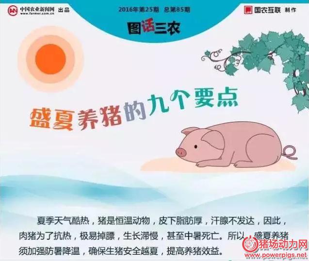 一年中最热的时候到了,九张图教你最好猪场防暑!