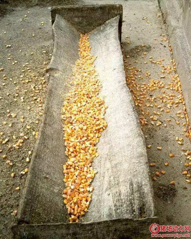 如何正确选用新玉米和陈玉米?