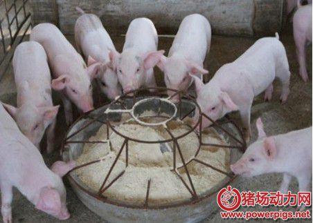 猪采食量突然大幅度下降应从何下手?