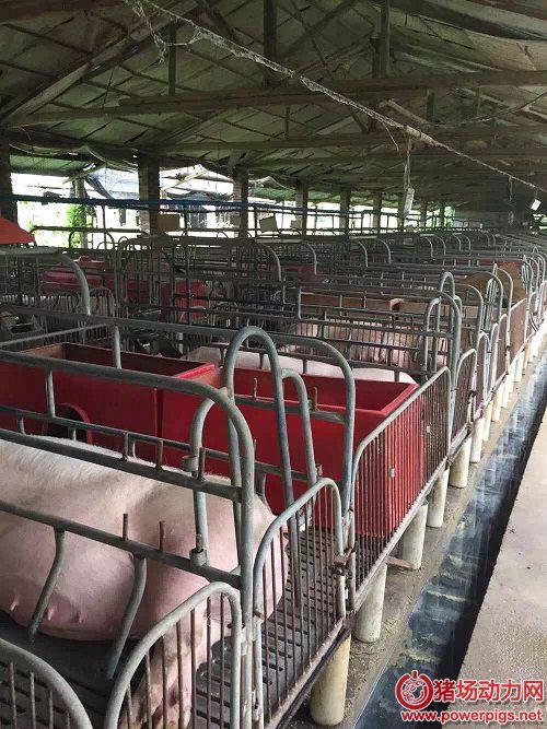 高手总结的养猪营养技术精华(上)