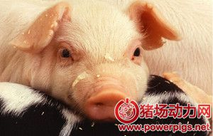 教你简易判断出各种猪病