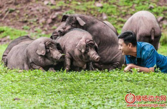 谈养猪过程中的杂料饲喂