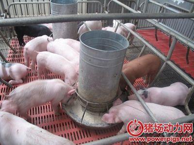 保育猪拉稀是因为保育料???
