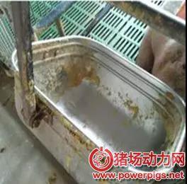梅雨季节,猪场需要这样预防霉