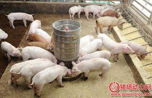 给猪换料的操作技术