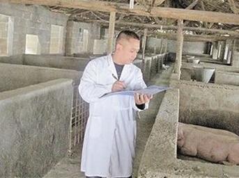 养猪管理:遵循领导法则