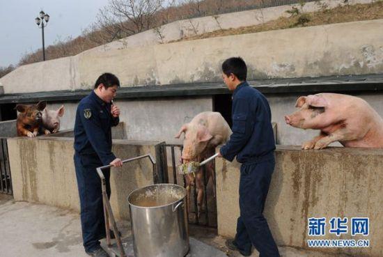 猪场物资与报表管理