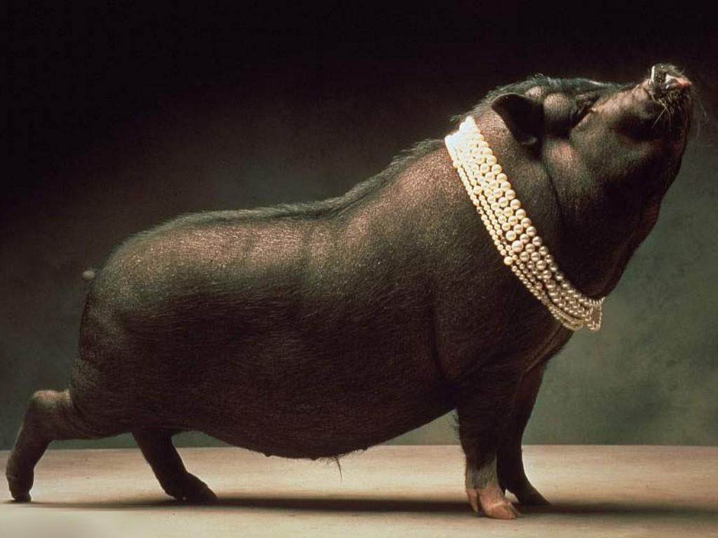 """养好猪有诀窍""""一种二料三管"""