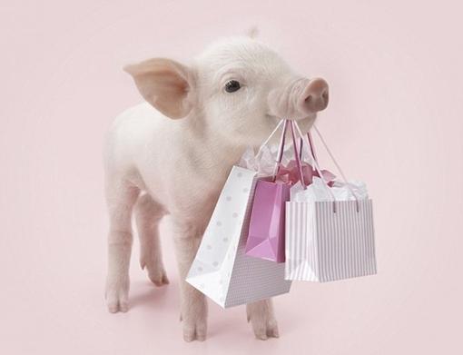 冬季猪舍应保持合适温湿度水平