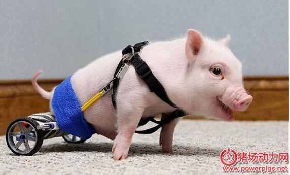 细数行业十大经济现象,让你未卜先知,养猪怎么挣大钱?