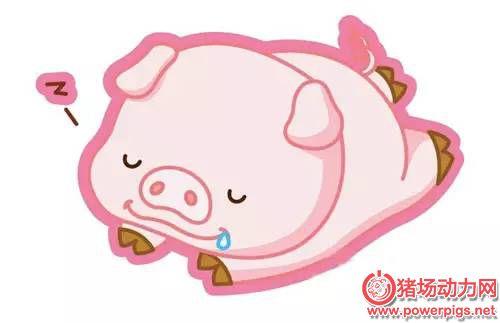 2016年养猪想赚钱?六大形势需了解