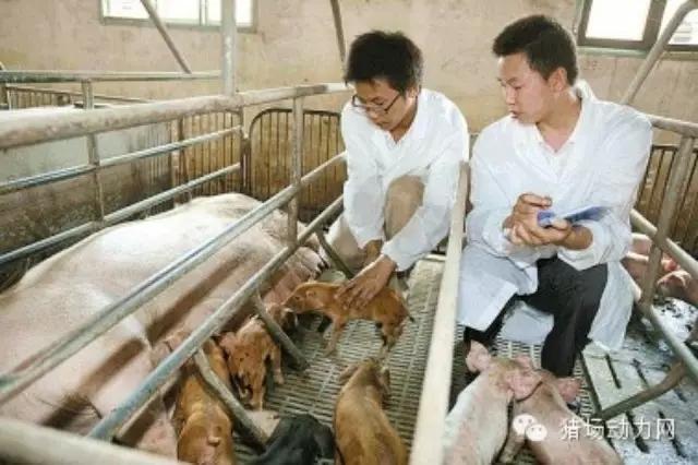 规模猪场各生产岗位每日十问,你能做到几问?