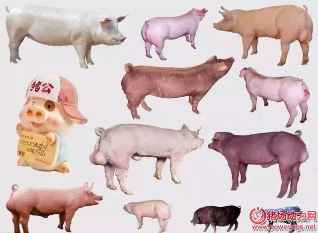 近5年来,养猪技术有这10大革新技术,你会吗?
