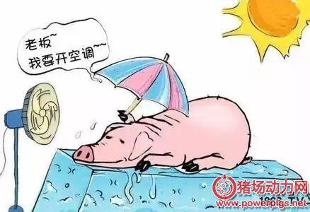猪夏季高温中暑的临床症状和防治措施