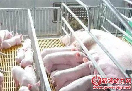 养猪成本降低,就是这样来的