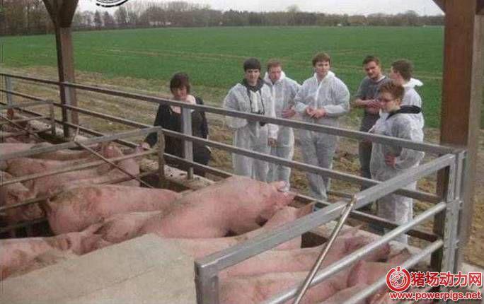 德国养猪场是如何处理猪粪的