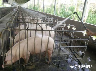 防治猪中暑的5种方法