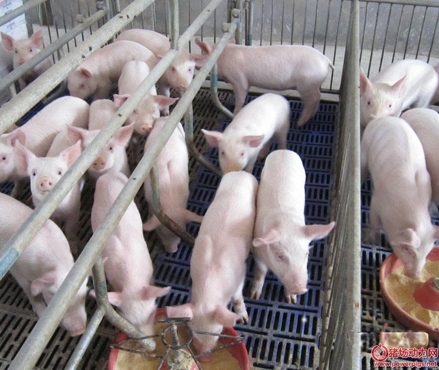 冬天猪场不用煤取暖,我们用什么取暖?