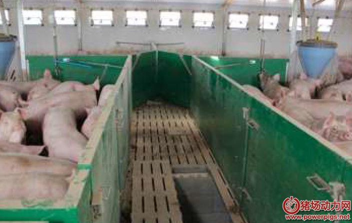 欧洲某家庭农场245头母猪的生产数据和管理措施