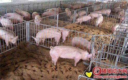 5招教你减少母猪非生产天数,提高年产窝数
