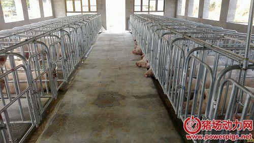 标准化养猪场工艺建设势在必行