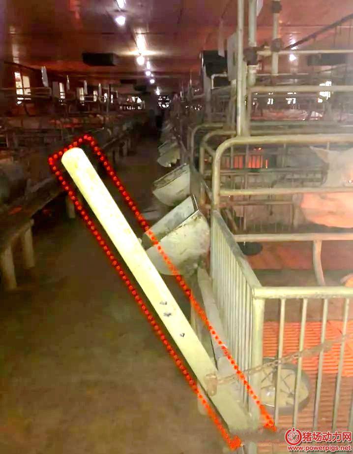 加一根管子,母猪料槽清理一秒搞定(多图)
