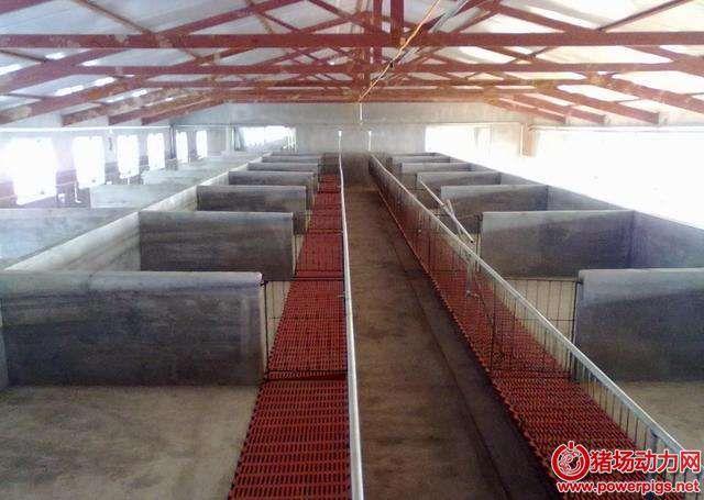 养猪场合理规划设计养猪场内部,尤其是这些细节!